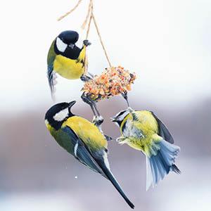Oiseaux de la nature